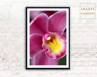 Flower Print ~ Nature Wall Art ~ Botanical Print ~ Large Flower Poster ~ Digital Print ~ Printable Art ~ Orchid Photo ~ Floral Art Print