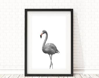 Flamingo Print, Nursery Animal Wall Art, Black and white animals, Flamingo poster, PRINTABLE wall art, Nursery Animal Decor, Nursery art