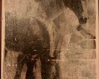 Wild Horses Print on Canvas