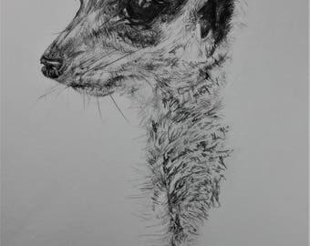 ORIGINAL pencil drawing - 'Meerkat'