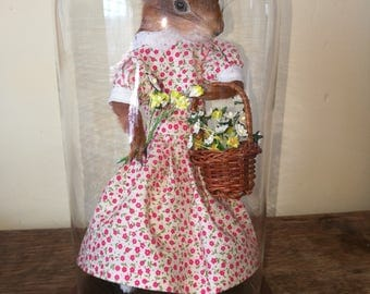 Taxidermy dressed red squirrel anthropomorphic