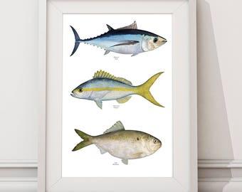 Fish Poster 02