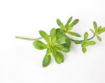 Fake Succulents - Artificial Green Aeonium Succulent - faux succulents, artificial succulents - ITEM 0405