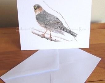 Sharp Shinned Hawk - Bird Watercolor Blank Greeting Card Print