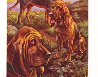 1930s Bloodhound Dog Print -  Vintage Antique Animal Pet House Home Decor Book Plate Art Illustration for Framing