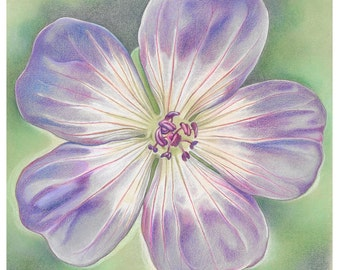 "Floral Greetings Card - ""Rozanne Geranium"""