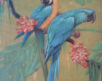 Parrot Print by Karl Plath 1927 MACAWS