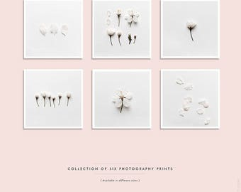 Flower print set, White Blossom Photo Collection, Botanical prints, Floral wall art, Set of 6, Square prints, Gallery Wall, Square Prints