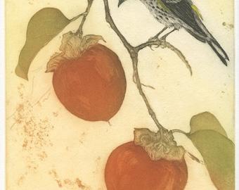 Audubon's Warbler in Persimmon Tree, Original Fine Art Etching