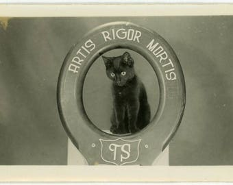 "Vintage Snapshot ""The Artis Rigor Mortis Kitty"" Odd Weird Signage Sign Letters Cat Animal Pet Black & White Photograph Found Vernacular - 28"