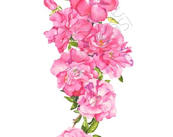 Climbing Rose print of watercolor painting, rose print, rose watercolor painting, floral watercolor print, pink rose 5 by 7 size, CR18817