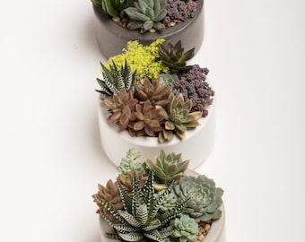 Concrete Planter, Concrete, Planter, Succulent Planter, Round Planter,  Concrete Bowl,  Concrete Catch All   1 ea. - Natural