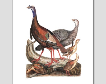 Turkey Art, Bird Print (Woodland Folk Art, Natural History Decor) 8x10 or 11x14 -- 19th Century Artist