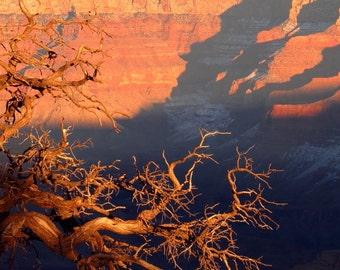 Night Ascending by Catherine Roché, Grand Canyon Photography, Arizona Desert Landscape Photography, Dead Tree Photography, Fine Art