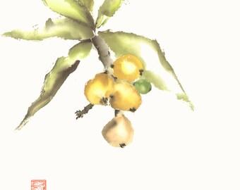Loquat Chinese Brush Original Watercolor Painting