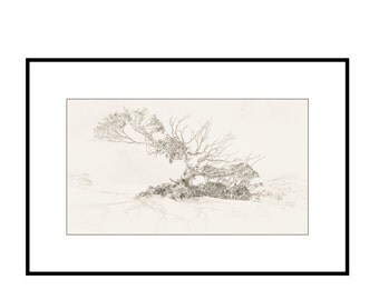 "Grandmother Tree Fine Art Photography -  black & white - tree - landscape - 16x9"" wall art - ready to frame - archival cotton rag paper"