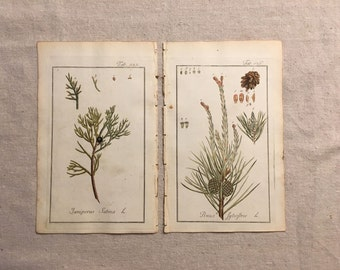 1790 Original JOHANNES ZORN German Botanical Prints--Savin Juniper & Scots Pine