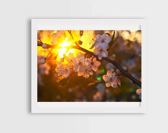 spring flowers, flower photography, cherry blossom photography, flower canvas art, macro flower photography, fine art photography, wall art