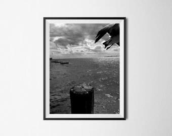 Take  Flight - Black and White Bird Photo | Bird Photo | Bird in Flight | Black and White Print | Home Decor | Wall Art | Bird |