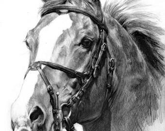 9x12 Custom Horse Portrait