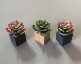 Miniature Succulents, Modern Miniature, Dollhouse Accessory, Set of Three