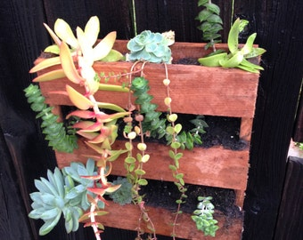 Mini Pallet Planter Succulent box