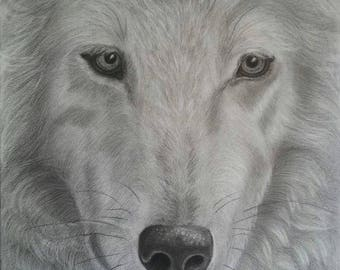 Pencil drawing of a white wolf