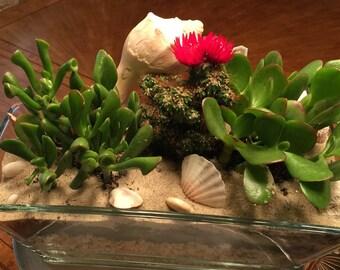 Succulent arrangement in slender vase