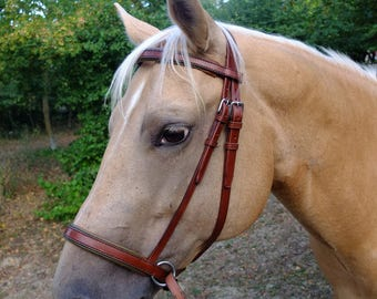 Custom Horse Bitless Bridle with Accent Color and Padded Noseband and Browband
