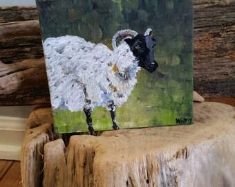 Acrylic painting. Sheep. fiber. Ireland.  Nature