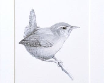 Wren Sketch Art Print