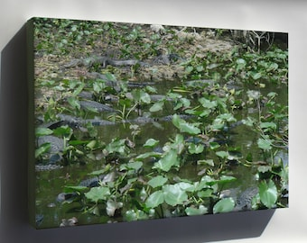 Canvas 16x24; Alligators At Shark Valley Picture 213