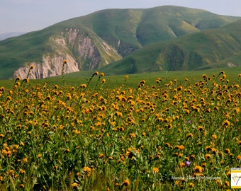 """Wildflowers Photography, """"Field of Yellow Flowers at Wind Wolves Preserve"""" Print, Yellow Flowers Field Cards, Gift for Wildflower Lovers"""
