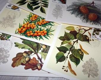 Vintage botanical cards - Soviet vintage maxi cards - Botanical postcard set - Forest art print - Woodland postcard stamps - Plant print set
