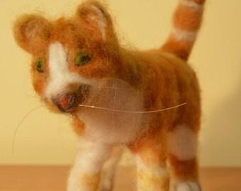 Pumpkin, Orange Tabby Cat