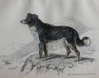 original engraving of a sheep dog, 1840