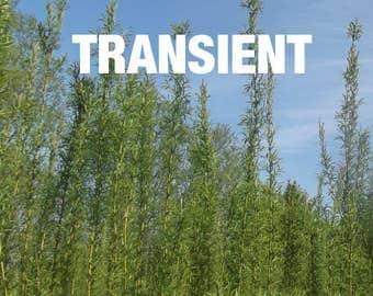 TRANSIENT issue 4