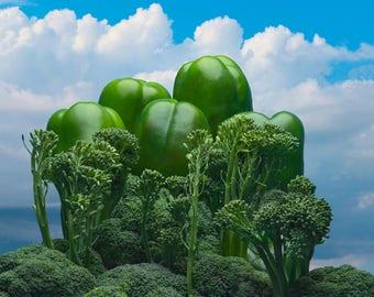"Broccoli Jungle, Abstract Food Landscape, Photography, Digital Download, Fine Art, Wall Art, 8""x8"""