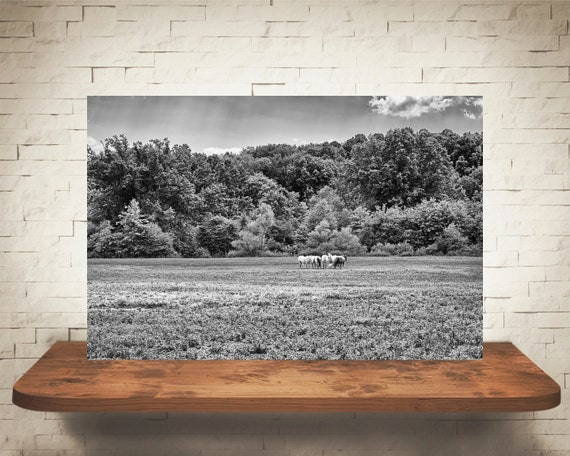 Horse Photograph - Fine Art Print - Home Wall Decor - Black & White - Equine Decor - Pictures of Horses - Wall Hanging - Horse Artwork
