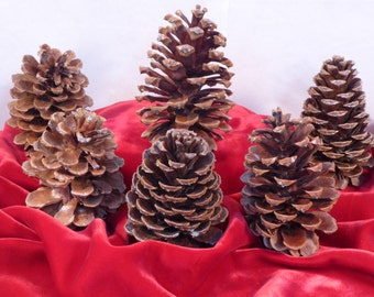 Fresh Pine Cones for Rustic Weddings. Natural Large Pine Cones for Archways, Back Drops, Tables Centerpieces and Alters. Set Customization.