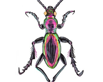 Framed Beetle Drawing, Unusual Art Work Print, Bug, Insect A4/A3