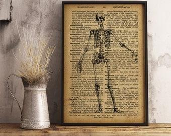 Skeleton Print, Anatomical Art Poster, Vintage Skeleton Dictionary Print, Human Skeleton Print, Doctor Gift, Medical School Decor (HA08)