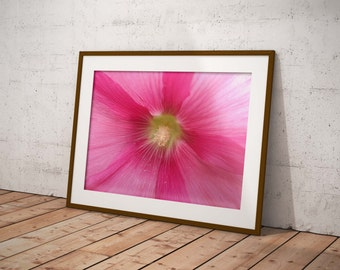 Photography hollyhock in digital download
