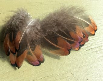 """10 x pheasant feathers with shimmering orange gold colours approx 2"""" long"""