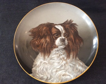 Decorative cavalier king charles spaniel dog plate. French 1900 ceramic dish. Antique Creil & montereau collectible plate
