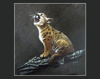 Mountain Lion - Matted Print