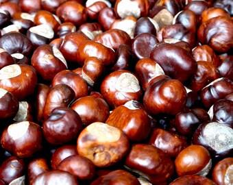 Organic Horse Chestnut Oil for Varicose Veins, Broken Veins, Arthritis, Muscle Pain Massage Oil, Carrier Oil, Facial Oil, Body Oil, Hair Oil