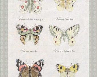butterflies, butterflies, poster and illustration, has print, entomology, Entomological Board, museum, natural history, Bohemian, decoration