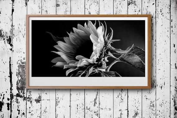 sonnenblume fotografie poster download panorama bild. Black Bedroom Furniture Sets. Home Design Ideas