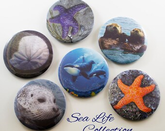 Sea Life Magnet Collection